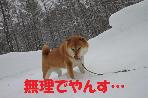 21 12月20日福島 073