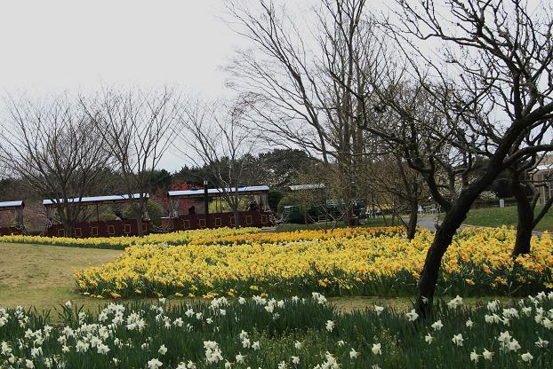 茨城県 海浜公園 058