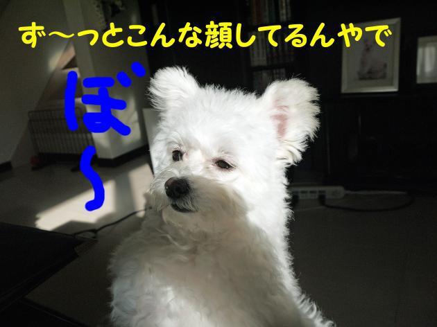 ぼ~_convert_20130127233214