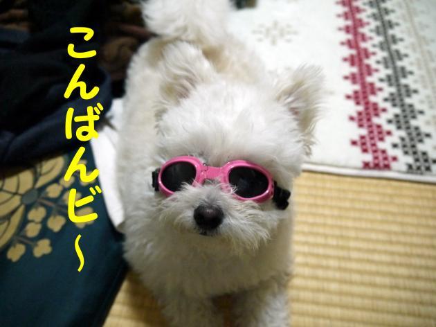 P1040527_convert_20130215003759.jpg