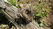 空になった鳥の巣
