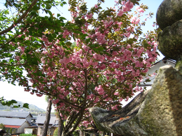 松尾神社 5