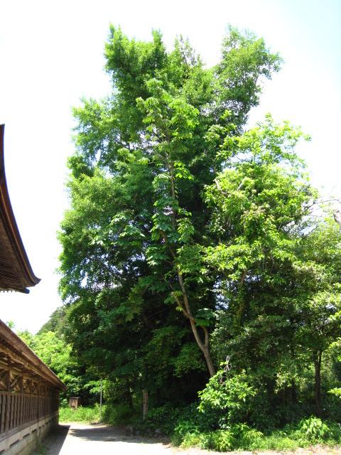 中山神社 33
