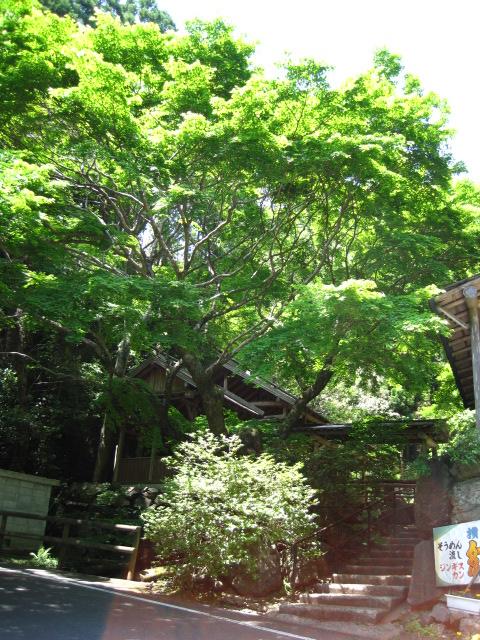 横野滝 25
