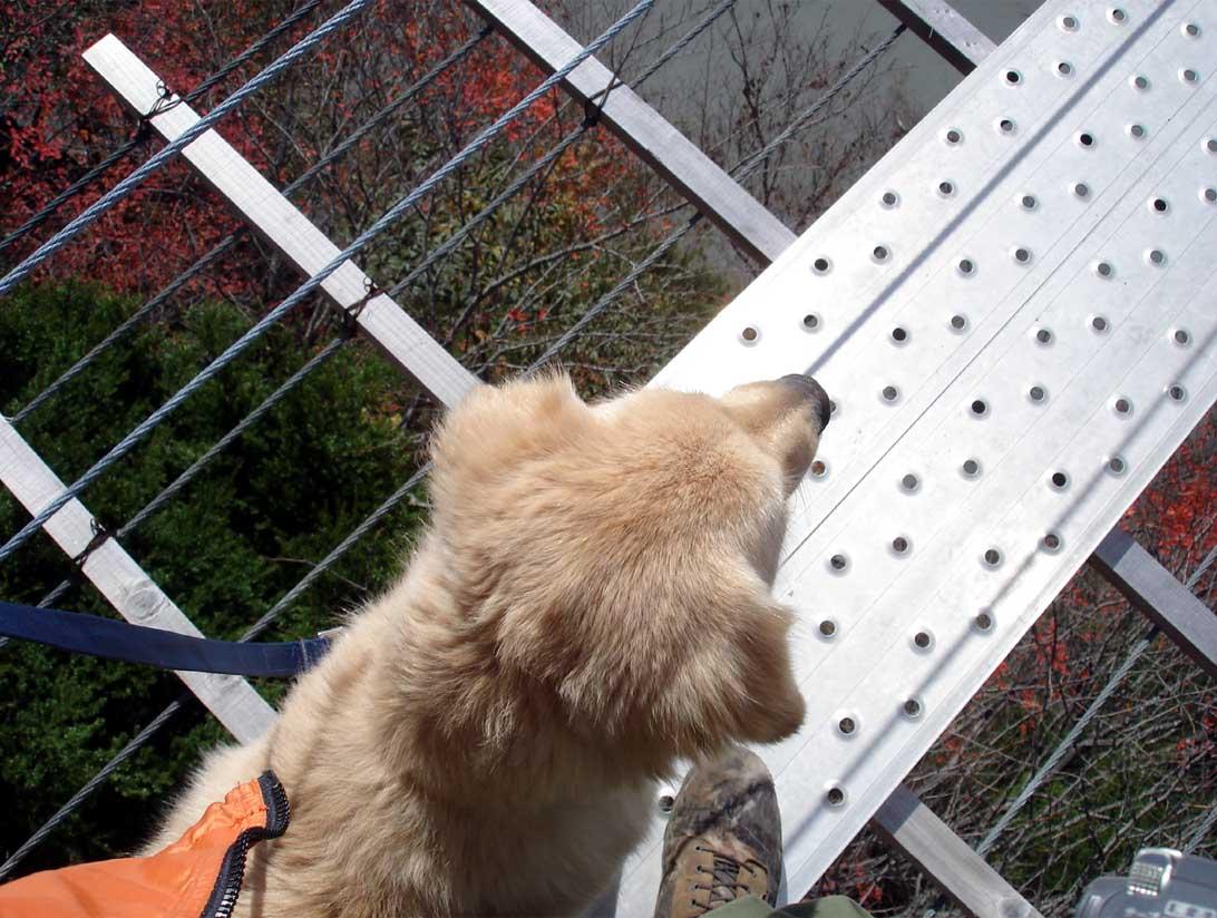 畑薙大吊橋④