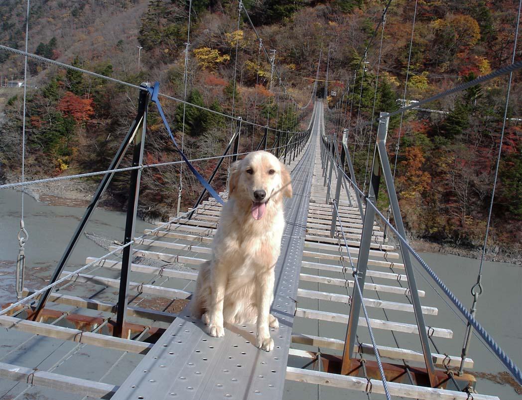 畑薙大吊橋⑦