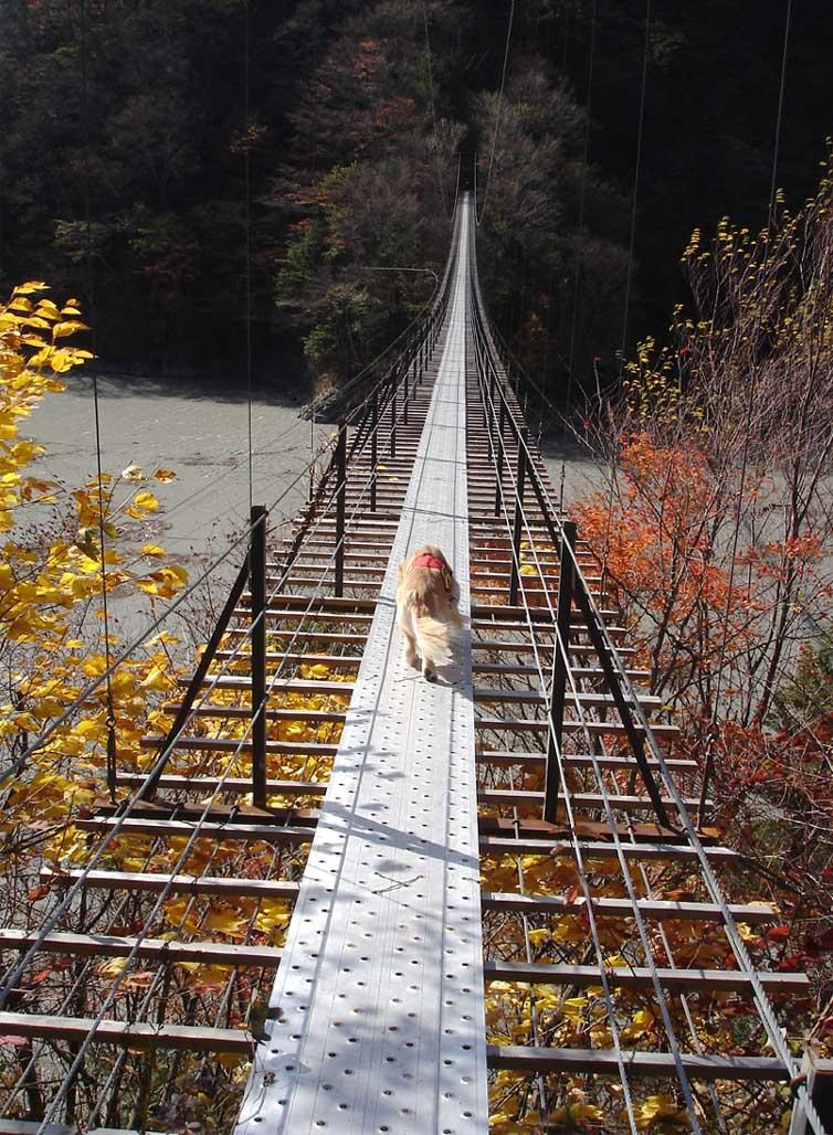 畑薙大吊橋⑨