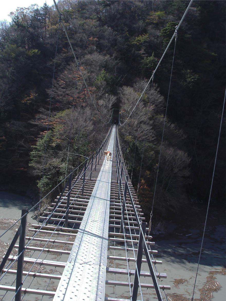 畑薙大吊橋⑭