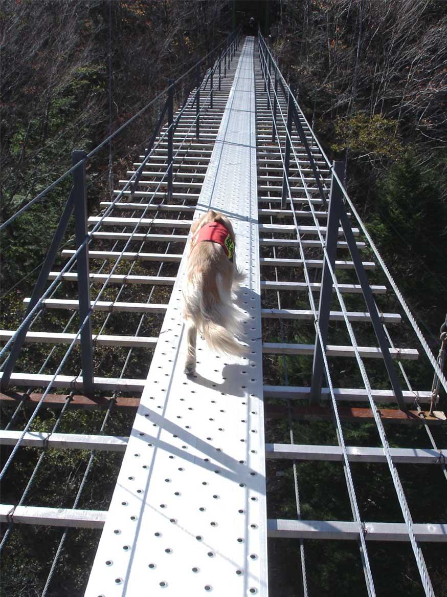 畑薙大吊橋⑰