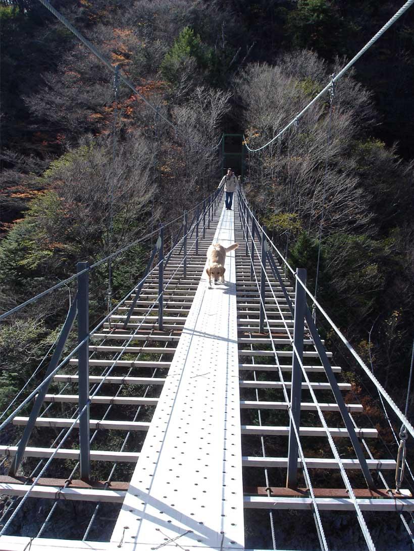 畑薙大吊橋21