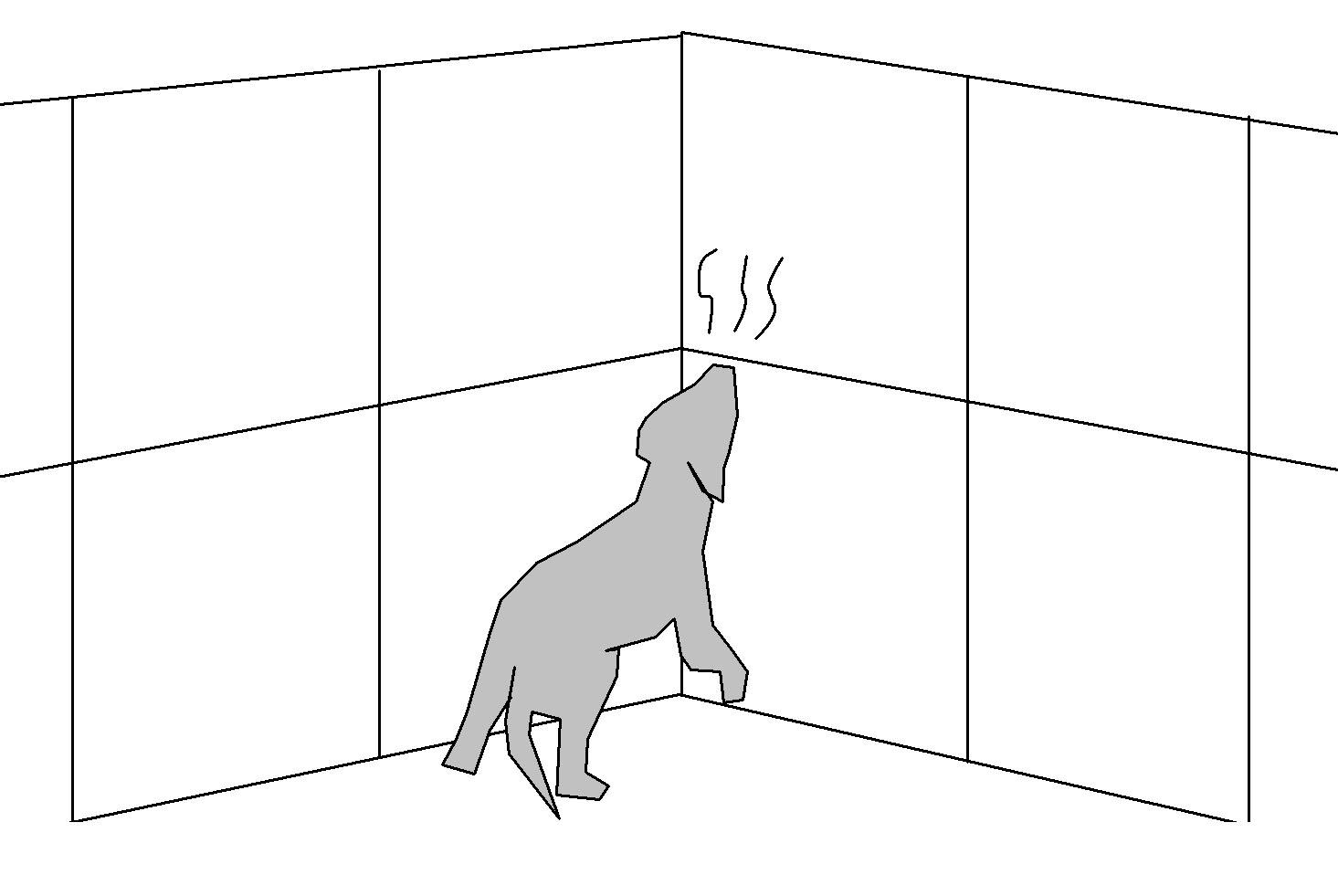 ⑤押入れ付近に鼻をつけて探る(イメージ)