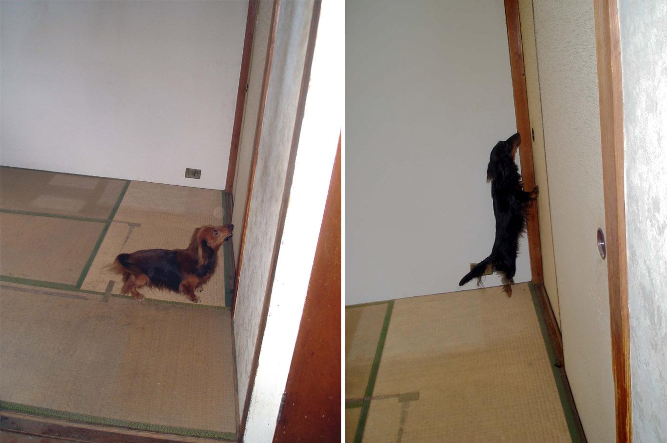 ⑥押入れに反応する犬①