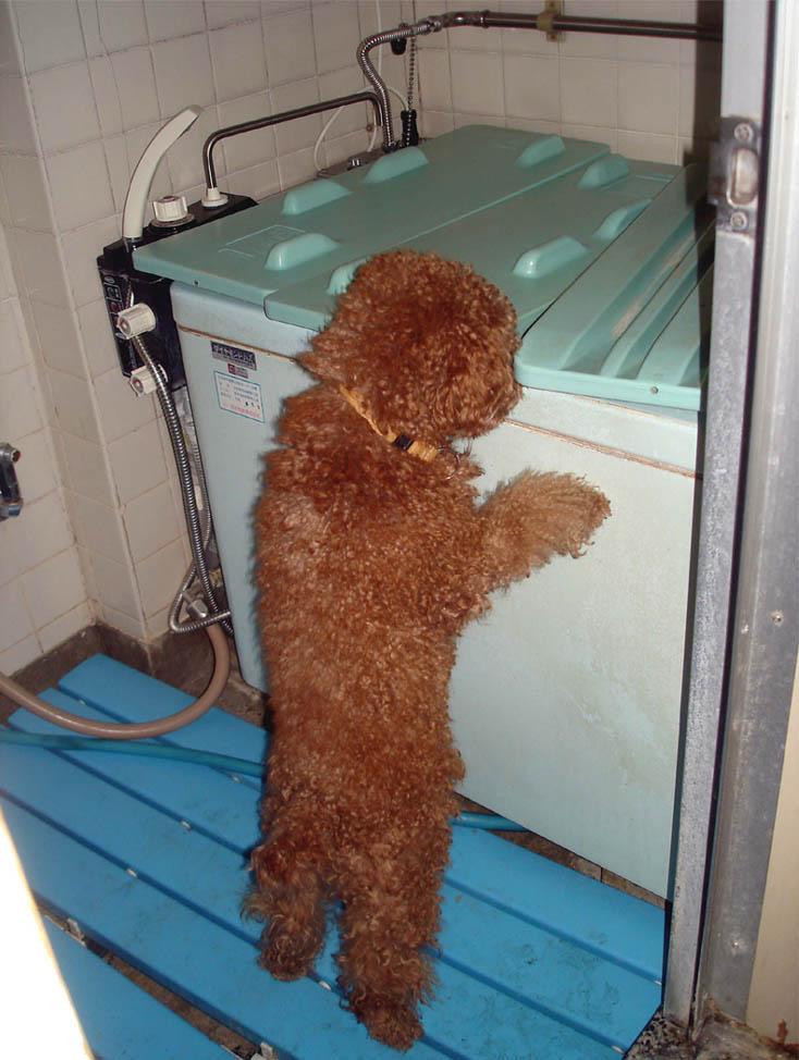 ⑬浴槽の臭いをとって(TPK)