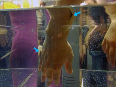 doctorfish2.jpg