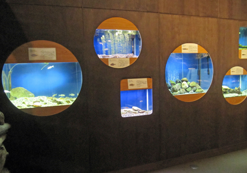fishmusium2.jpg