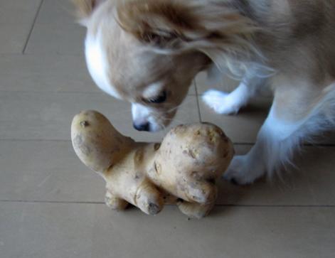 footanpotato.jpg