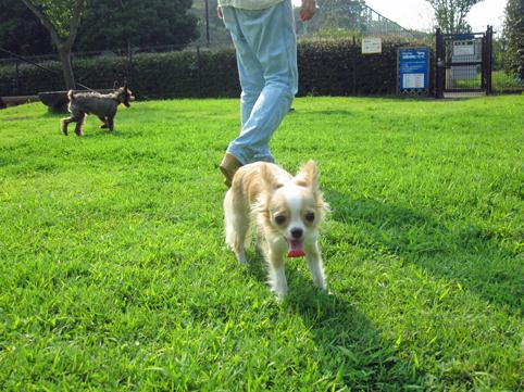 hottestparkdogrun3.jpg