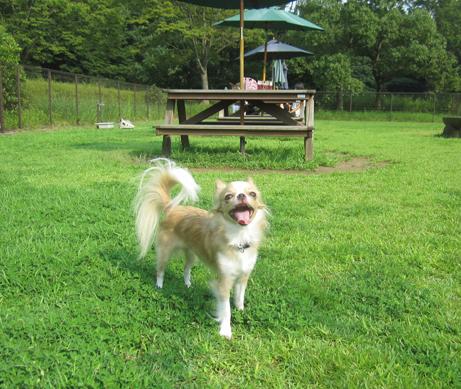 hottestparkdogrun4.jpg