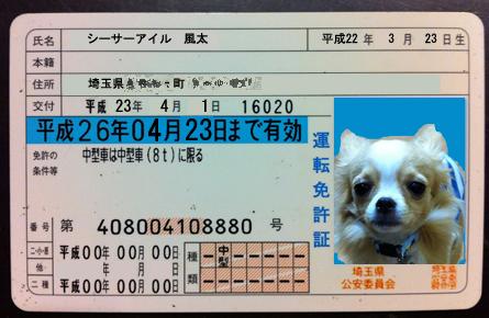 licence2.jpg