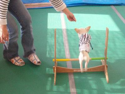 jump47.jpg