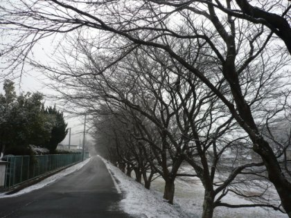 20100207_sakura_001.jpg