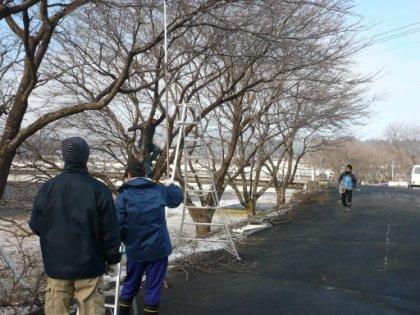 20100207_sakura_005.jpg