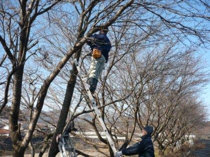 20100207_sakura_007.jpg