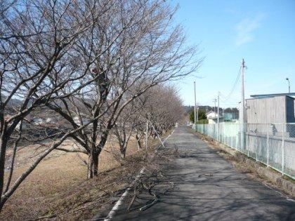 20100207_sakura_010.jpg