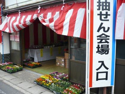 花咲きフェアー201004_001
