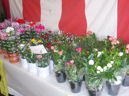 花咲きフェアー201004_011