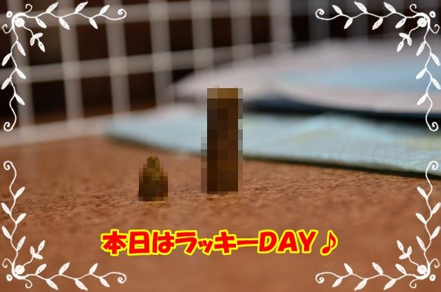 DSC_5625.jpg