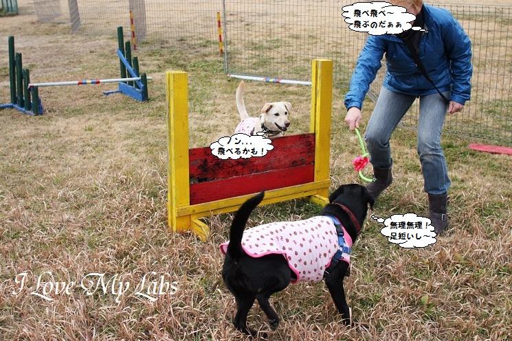 IMG_0301 (2)Wan 2