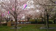 C360_2013-03-24-10-46-19.jpg