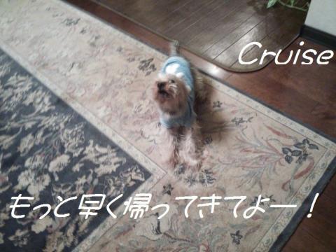DSC_0071_convert_20130310000606.jpg