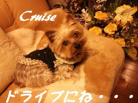 DSC_0136_convert_20130316214233.jpg