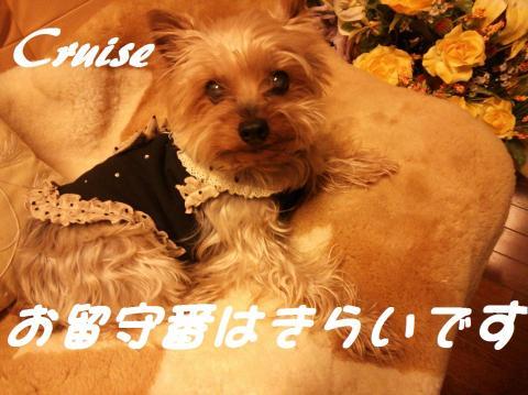 DSC_0137_convert_20130316214251.jpg