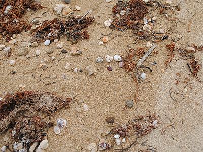 嘉陽の海岸_05