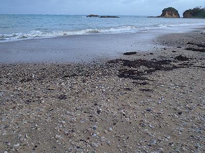 貝殻拾いの場所02