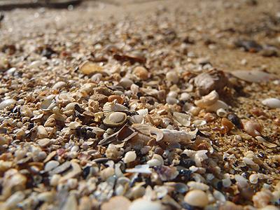 貝殻たくさん