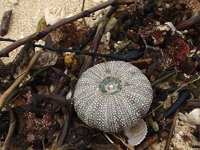 貝殻拾い0807-03