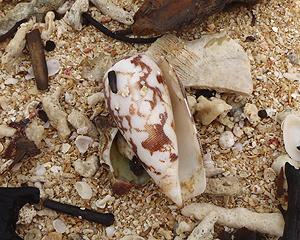 貝殻拾い0807-05