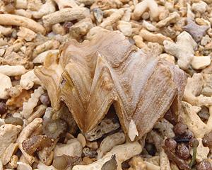 貝殻拾い0807-10