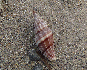 貝殻拾い0807-28