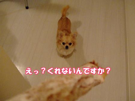 DSC2009_1127(007).jpg