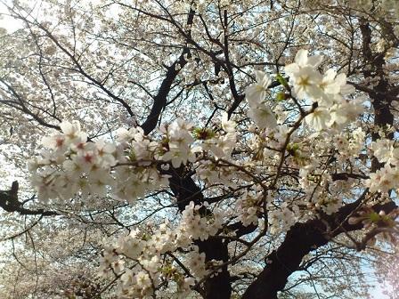 13-03-23-41花見