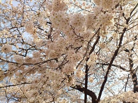 13-03-23-46花見