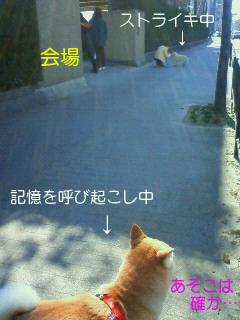 NEC_0083_20110406162124.jpg