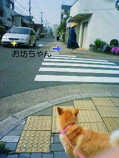 NEC_0130.jpg