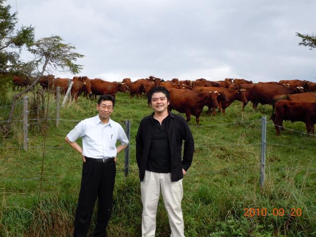 人間と、牛