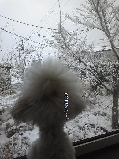 Image1651a_20111211191225.jpg